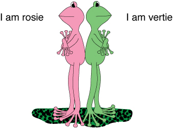 We are two cool frogs